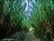 Torà: Passejant sota les canyes  Carmen Aparicio