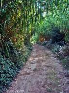 : Passejant sota les canyes  Carmen Aparicio