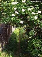 Torà: La primavera  Carmen Aparicio