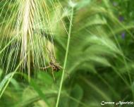 Torà: Flora i fauna  Carmen Aparicio