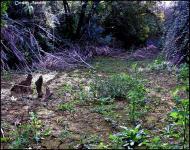 Torà: El riu abans de netejar  Carmen Aparicio