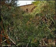 Torà: El riu Llanera abans de netejar  Carmen Aparicio