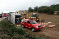 Els Bombers treuen els animals del camió accidentat