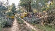 L'Aguda: Camí boscà  Ramon Sunyer