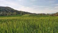 Vall del Llobregós: la primavera