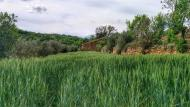 Biosca: Paisatge  Ramon Sunyer