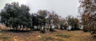 Vallferosa: bosquet a mas Vilella  Ramon Sunyer