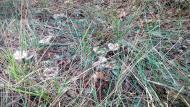 Vallferosa: Darrers fredolics  Ramon Sunyer