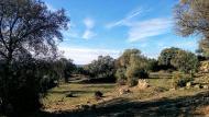 Vallferosa: velles oliveres  Ramon Sunyer