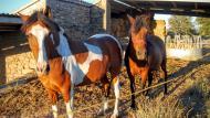 Puigredon: Cavalls  Ramon Sunyer