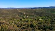 Cellers: Els bosc es recupera a l'entorn del monestir  Ramon Sunyer