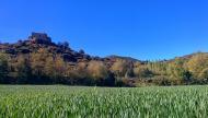 Claret: Els verds dels blats a can Vila  Ramon Sunyer