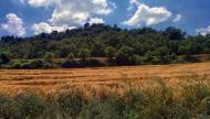Calonge de Segarra: camps  Ramon Sunyer
