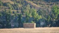 L'Alzina: paisatge  Ramon Sunyer