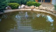 Sanaüja: estany  Ramon Sunyer