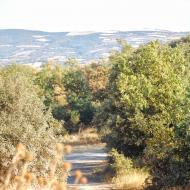 Llanera: Paisatge  Ramon Sunyer