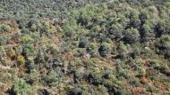 Vallferosa: paisatge  Ramon Sunyer