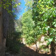Vallferosa: camí  Ramon Sunyer