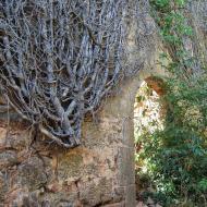 Vallferosa: heura  Ramon Sunyer