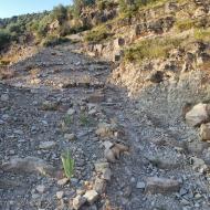 L'Aguda: camí vell  Ramon Sunyer