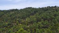 Fontanet: boscos  Ramon Sunyer