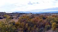 Palouet: bassa  Ramon Sunyer