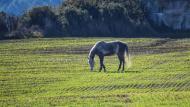 Llobera: cavall  Ramon Sunyer