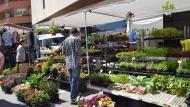 Torà: Planters i flors a la plaça de la Creu  Ramon Sunyer
