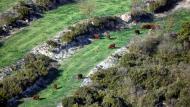 Pinós: bestiar pasturant  Ramon Sunyer