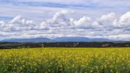 Coscó: vista del Montsec  Ramon Sunyer