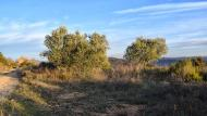 L'Aguda: paisatge  Ramon Sunyer